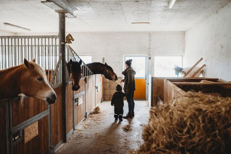 Full length of man standing in barn