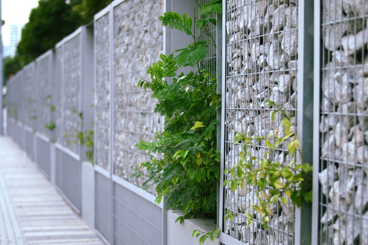 Close-up of plants growing against wall
