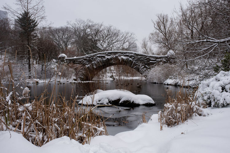 Snow covered bare trees by lake