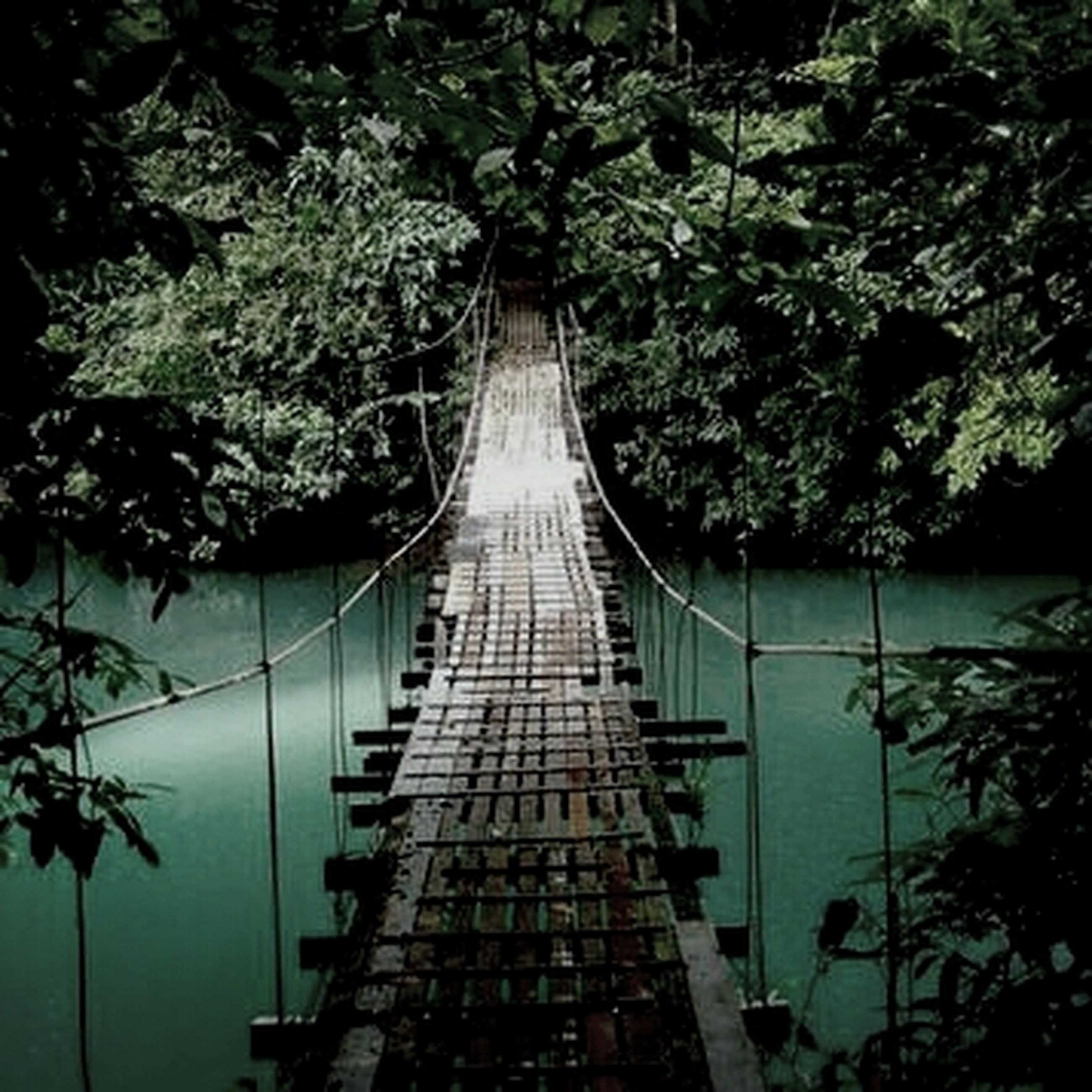 tree, connection, the way forward, bridge - man made structure, diminishing perspective, built structure, growth, footbridge, railing, water, tranquility, bridge, nature, vanishing point, branch, architecture, transportation, no people, forest, sky