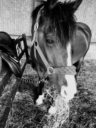 Horses Horse Riding Barn Saddle Bridle
