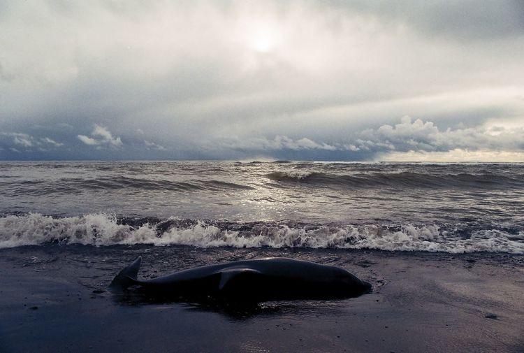 Dead animal on beach