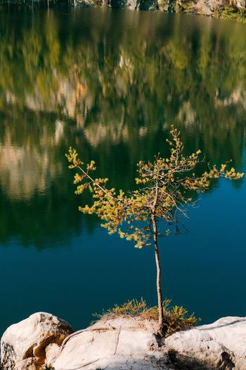 A lone birch tree Trynidada Leicacamera Adršpach EyeEm Selects Water Lake Reflection Nature Plant Beauty In Nature Day Tranquility Tree No People Growth Outdoors Scenics - Nature High Angle View Standing Water Tranquil Scene Waterfront Sunlight