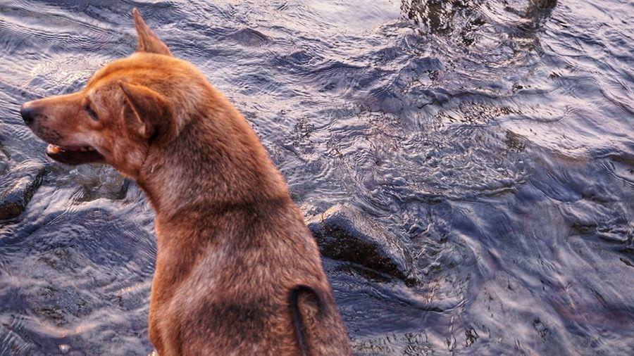 High angle view of dog on rock
