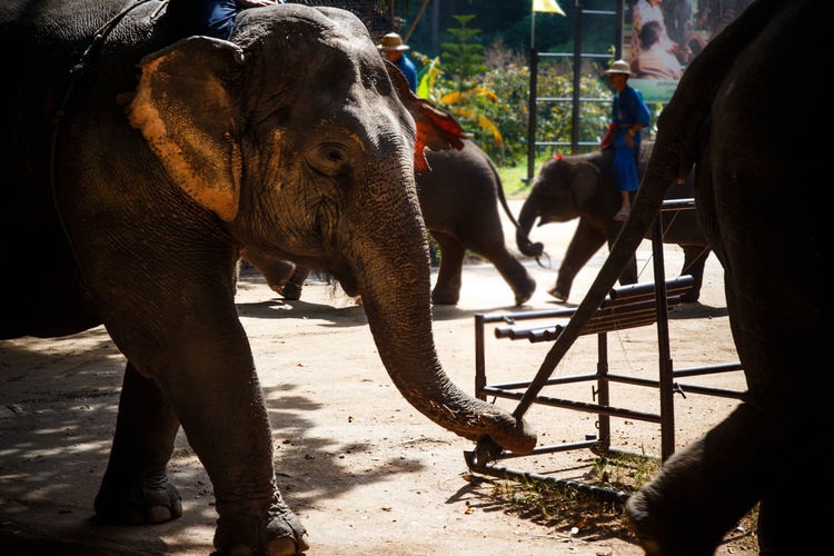 Close-Up Of Elephants In Circus