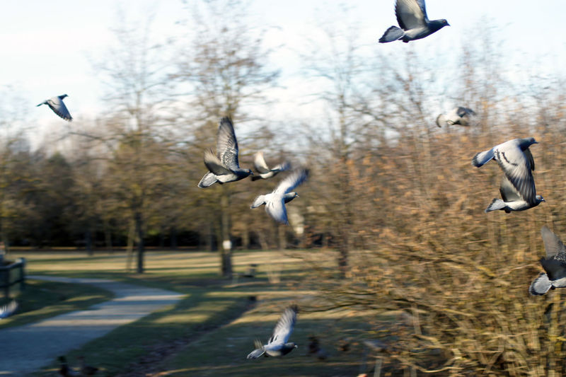 Seagulls flying in the background