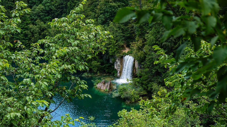 Wasserfall Tree Water Branch Green Color Plant Waterfall Woods Falling Water Forest