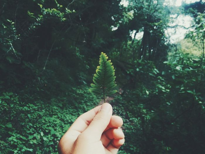 Showcase: January because we love nature. Nature_collection Tree Love Green Hello World Enjoying Life Trip EyeEm Best Shots OpenEdit Amazing View The Week On EyeEm