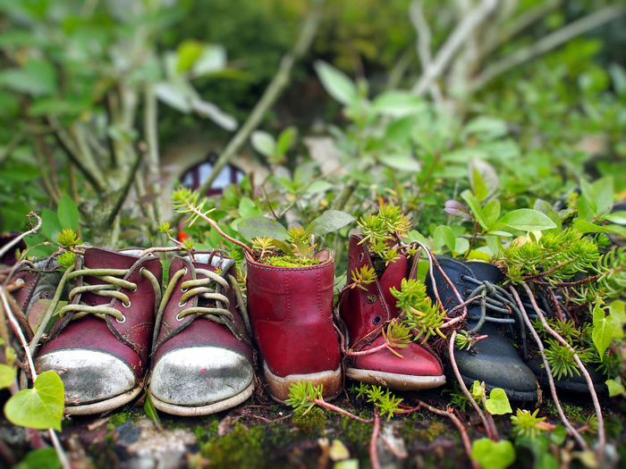 Shoe Plant Nature Growth Green Color Day Pair Land No People Grass Close-up Field Selective Focus Outdoors Leaf Focus On Foreground Plant Part Boot Shoelace Absence Compatibility Personal Accessory
