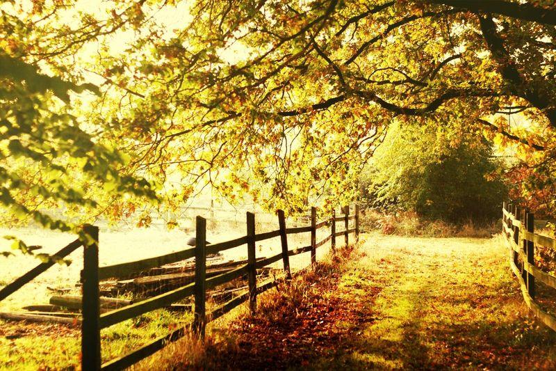 Taking Photos Happycolortrip Autumn Colors