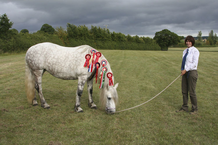 Highland Pony Pony Adult Domestic Domestic Animals Field Full Length Grass Herbivorous Highland Pony Horse In Hand Land Leisure Activity Livestock Mountain And Moorland Native Pony Nature One Animal Outdoors People Pets Plant Rosettes Sky Standing