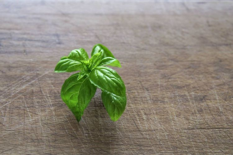 High angle view of fresh green leaves on table