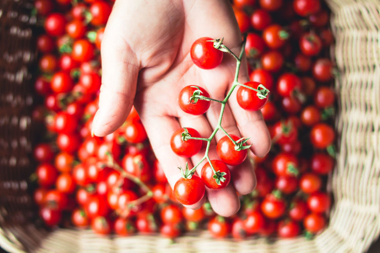 Tomato cherry in basket Tomato in hand South Asia Berry Fruit Body Part Close-up Finger Food Food And Drink Freshness Fruit Hand Healthy Eating Holding Human Body Part Human Finger Human Hand One Person Real People Red Red Currant Ripe Rowanberry Wellbeing Women