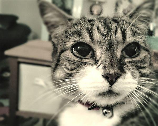My kitten Honey, aged 11 now Cats Cats Of EyeEm Tabby Cat Queen Cat Pretty Cat Pets Animals