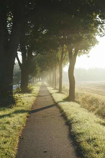 Sunray and an alley Tree Shadow Footpath Sunlight Landscape The Way Forward Rural Scene Autumn Scenics WoodLand Road Outdoors Nature Fog Single Lane Road Deciduous Tree Grass Forest No People Day Sunrise_Collection Landscape_Collection Landscape_photography Foggy Morning Sunrays