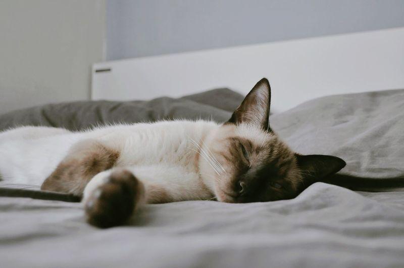 Close-up of cat lying on sofa