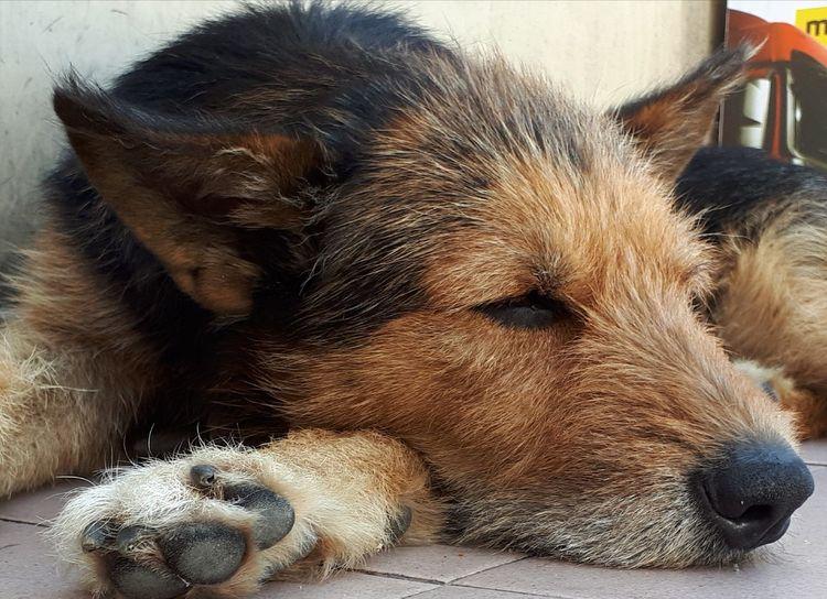 Dog Pets Animal Themes One Animal Domestic Animals Mammal Portrait