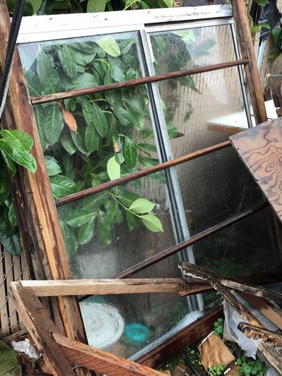 """Window in backyard "" Leaf Plant Green Color Growth No People Day Outdoors Nature Freshness Greenhouse Close-up old window Winston Oregon Lumber Industry"