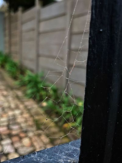 EyeEm Gallery Eye4photography  EyeEm Best Shots EyeEm Nature Lover Spider Web Fragility Focus On Foreground Water Vulnerability  No People Close-up Nature Drop Spider Wet Day Outdoors Complexity Pattern Beauty In Nature Natural Pattern Web