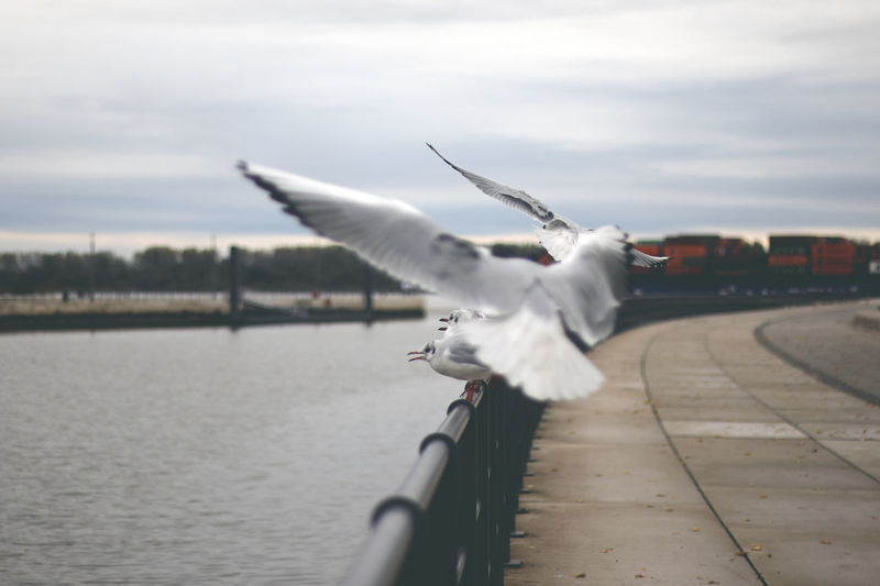 View of seagull flying against cloudy sky