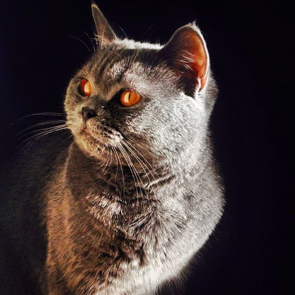 Catstagram Catsofinstagram Cat_fotografia Instacat_meows Instacatsgram Instacatalunya Instacat Catlover