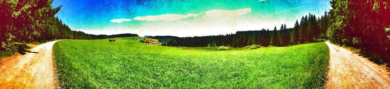 Thurner Panoramaweg Thurner Wandern Black Forest
