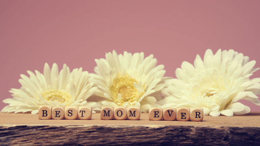 Best mom ever Best Mom Ever Holidays Mother Pink Background Card Close-up Communication Flowers Freshness Gerbera Daisy Greetings Indoors  Mom Mothers Day No People Studio Shot Text White
