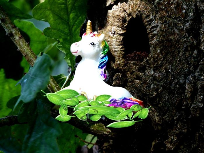 Finally i found another unicorn again🙄 Kissed By The Sun Unicorn Not The Last One.. For My Friends🙄🙋♀️ Happy Moment♥ Lucky Me🦄 Follow Your Dreams Follow Your Heart  Mood Captures My Expression I Did It My Way Fantasy🦄 Edit It My Way Leaf
