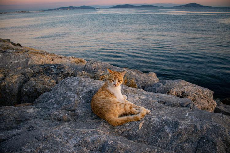 Cat relaxing on rock by sea