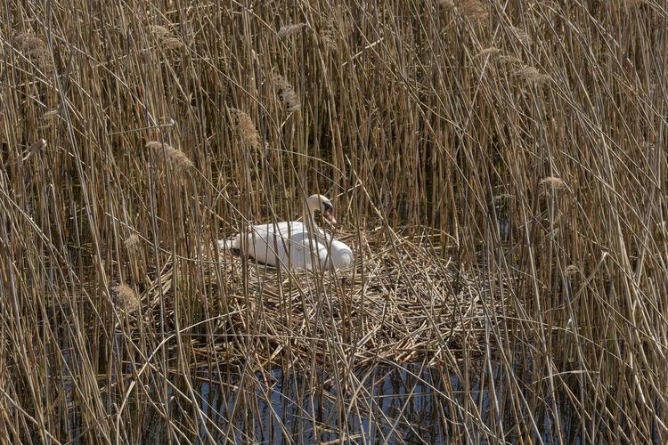 View of bird perching on grass