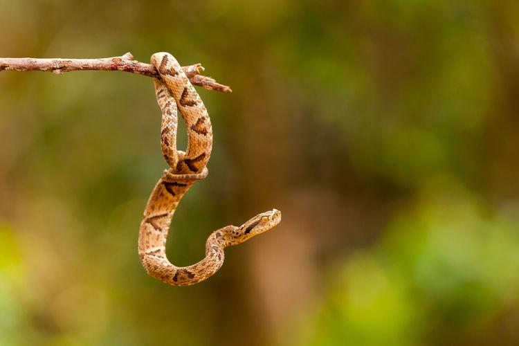 Close-Up Of Snake Hanging On Stem