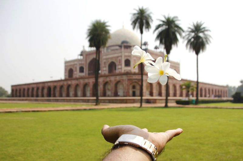 Cropped hand of man catching flowers against monumental building
