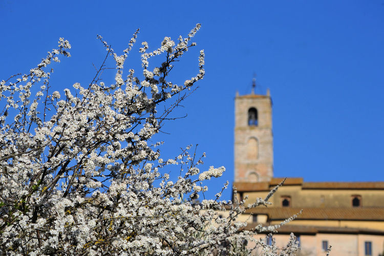 blooming white blackthorn against the blue sky and ancient village background Plant Flowering Plant Architecture Low Angle View Branch Clear Sky Springtime No People Spirituality Outdoors Flower Tower Building Place Of Worship Built Structure Sky Blackthorn Background EyeEm Best Shots EyeEm Gallery
