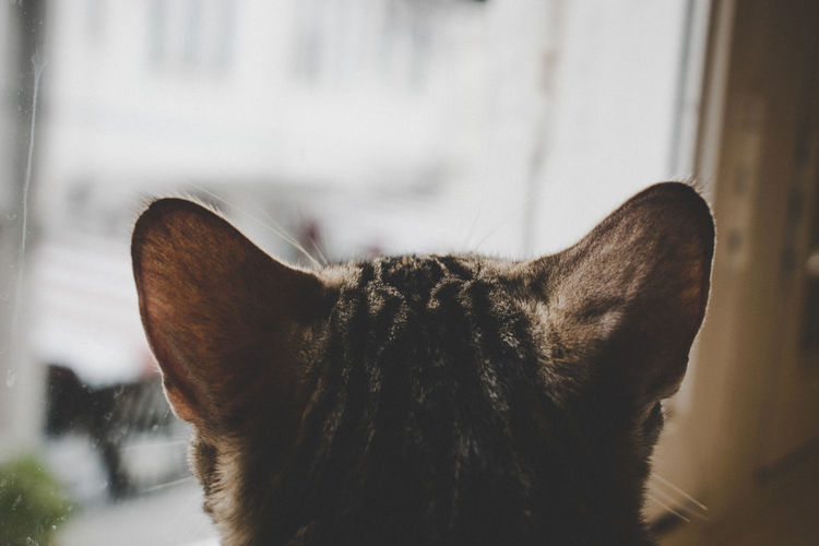 Cat Cafe Waiting Animal Themes Cat Close-up Cozy Day Domestic Animals Domestic Cat Feline Indoors  Looking Mammal No People One Animal Pets Watching Window Breathing Space The Week On EyeEm