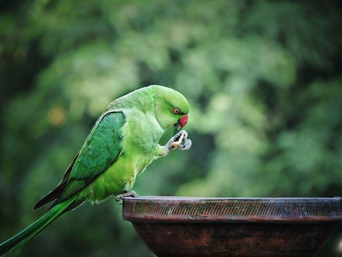 EyeEm Selects Birds Of EyeEm  Parrot Bird Photography Birds Bird Of Prey Birdfreaks Parakeet Bird Birds_collection Birds🐦⛅ Bird Feeder Perching Insect Tree Leaf Close-up Green Color Plant Caterpillar Crawling Slow