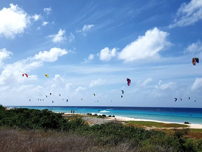 Numerous Kite Surfer above turquoise blue Caribbean sea with bushes and grasses in foreground and under blue sky with clouds. ... EyeEm Selects Caribbean Island Blue Sky Caribbean Life Blue Sky White Clouds Blue Sky And Clouds people and places Postcard Travel Travel Destinations Bird Water Parachute Flying Paragliding Sea Beach Blue Sand Mid-air Kiteboarding Parasailing Kite Water Sport Surfing Wave Aquatic Sport Gliding Extreme Sports Aerobatics This Is Strength My Best Photo The Traveler - 2019 EyeEm Awards