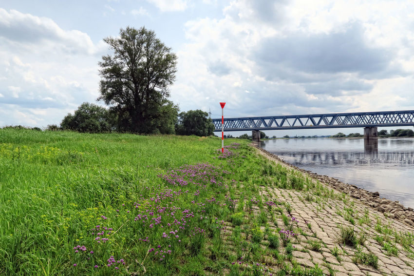 Railroad bridge over Elbe river and its typical meadows in summer time. located next to Tangermuende, Saxony-Anhalt (Germany). Architecture Bridge Bridge - Man Made Structure Built Structure Cloud - Sky Day Elbe Elbe River Elberadweg Germany Nature No People Outdoors Railroad Railroad Bridge Saxony Anhalt Saxonyanhalt Sky Tangermünde
