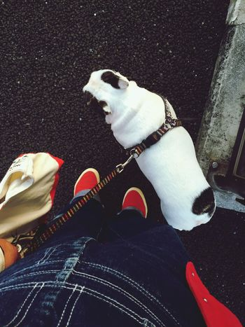 Enjoying Life Footloose And Fancy‐free Ilovemydog Http://youtu.be/NGFToiLtXro Can't Take My Eyes Off You - Frankie Valli And The 4 Seasons