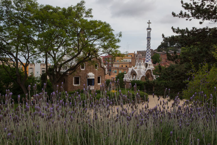 Park Guell Gaudi Lavender Plant Architecture Built Structure Tree Sky Flower Nature Flowering Plant Beauty In Nature City Purple Growth ArtWork
