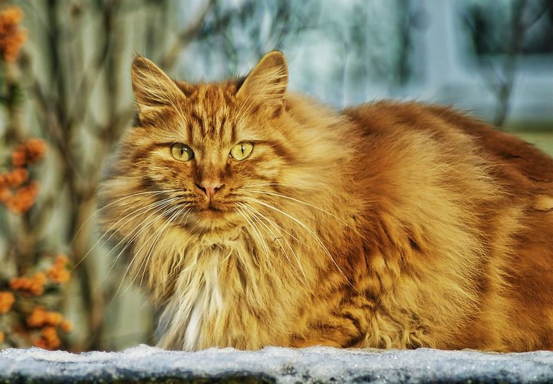 Animal Themes Close-up Day Domestic Animals Domestic Cat Feline Looking At Camera Mammal No People One Animal Outdoors Pets Portrait