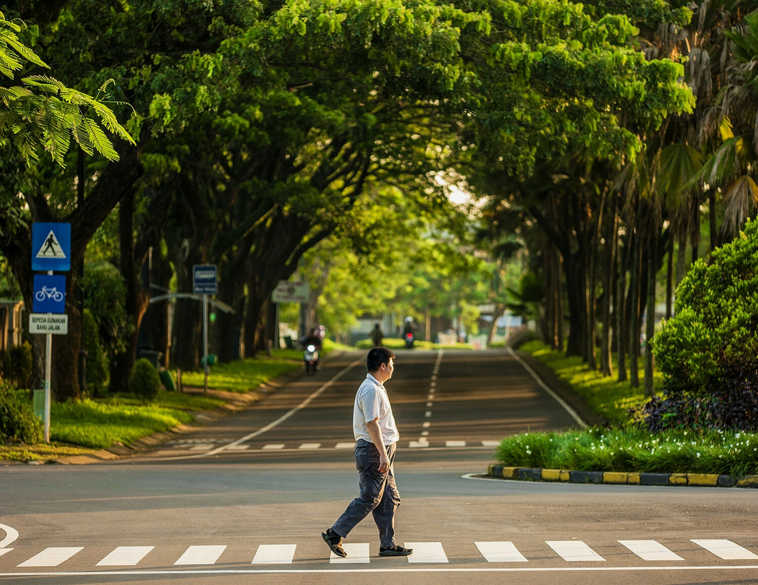 transportation, tree, road, street, full length, lifestyles, land vehicle, rear view, men, bicycle, mode of transport, walking, on the move, leisure activity, riding, road marking, the way forward, person