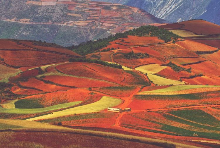 Yunnan China Photos Landscape_photography Landscape_Collection China Landscape Rural Scene Mountain Multi Colored Agriculture Patchwork Landscape Aerial View Full Frame Backgrounds Field Red Farmland Cultivated Land Terraced Field Agricultural Field Plantation Farm Rice Paddy Rice - Cereal Plant Plowed Field