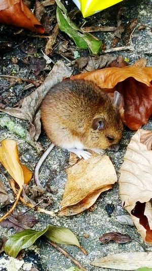 Photography Wildlife & Nature Mice Wouldham