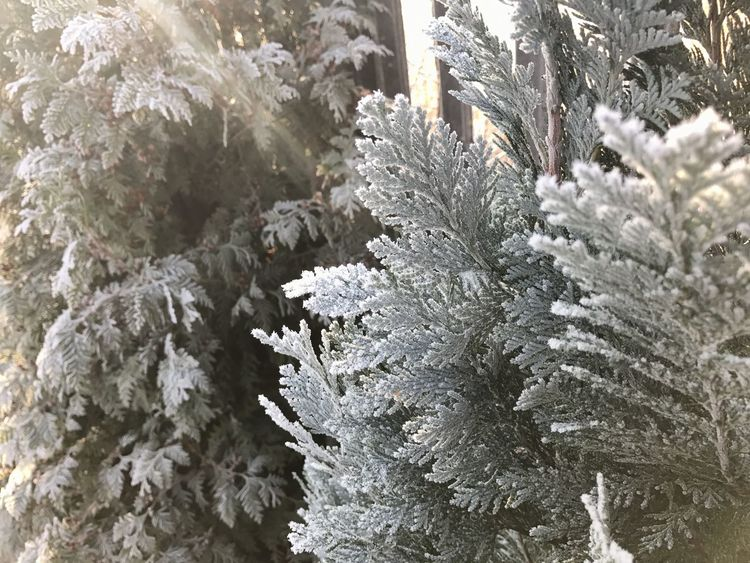 Beauty In Nature Close-up Cold Temperature Day Fragility Freshness Frozen Growth Ice Nature No People Outdoors Plant Snow Snowflake Tree Winter