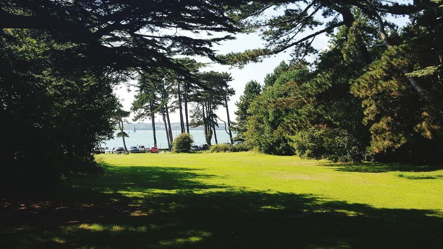 Nature's beauty Natures Treasures ~ Beauty On Our Doorstep Nature_collection trees meets coast Light And Shadow