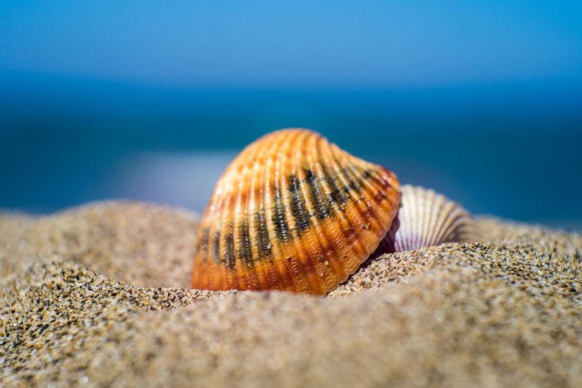 Conchiglie Mare Nature Outdoors Sabbia Sand Sea Seashells