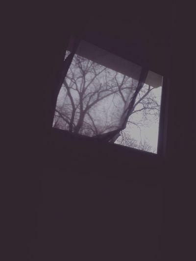 Grey Hangover Makesense Nature_perfection