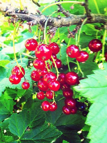 Tasty currants!
