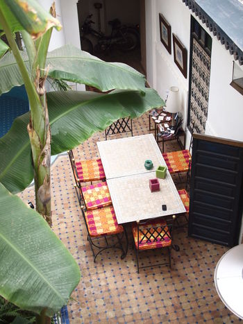 Courtyard  Courtyard House Front Or Back Yard Moroccan Style Morocco Plant Riad