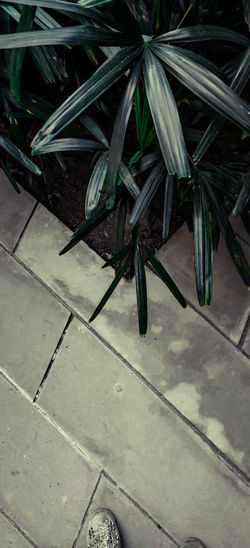 High angle view of potted plants on footpath